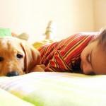 I cani domestici proteggono da asma e infezioni