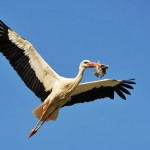 Andalusia: il parco di Coto Donana
