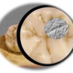 Strategie dietetiche dei Sapiens, un vantaggio nei confronti dei Neanderthal