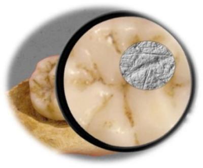 neandertal-dieta
