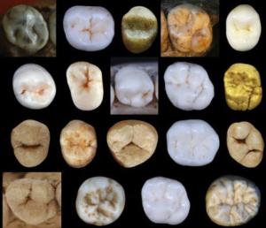 Neanderthal ed esseri umani moderni si separarono 800mila anni fa