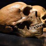 Ricostruiti i primi incroci tra le antiche popolazioni umane