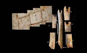 Cannibalismo tra i Neanderthal di Francia?