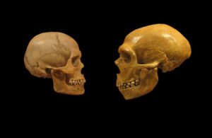 Influenza genetica dei Neanderthal al 'bivio' tra Asia ed Europa