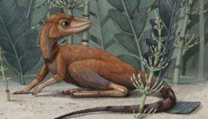 Scoperto un piccolo parente di dinosauri e pterosauri