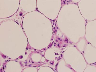 cellule_di_grasso