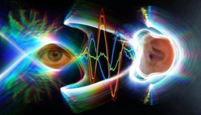 Occhi e orecchi hanno movimenti sincronizzati (crediti: Jessi Cruger; David Murphy, Duke University)