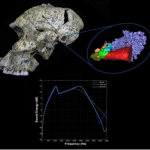 I fossili rivelano le capacità uditive dei primi esseri umani