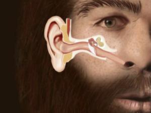 I Neanderthals si estinsero a causa di infezioni agli orecchi