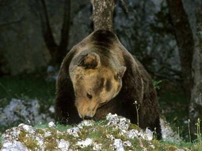 orso e caccia