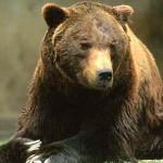 Il capo della segreteria del Ministero dell'Ambiente in Abruzzo per l'orso marsicano