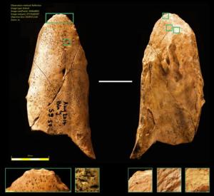 I Neanderthal non erano inferiori ai Sapiens nelle capacità manuali