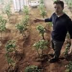 Crescono pomodori e piselli sul 'suolo simulato' di Marte e della Luna