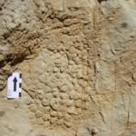 Prima impronta fossile di pelle di dinosauro trovata in Europa