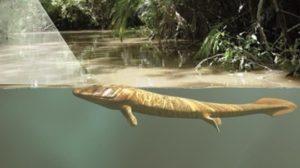 Lo sviluppo degli occhi indusse i pesci ad uscire dall'acqua per conquistare la terra