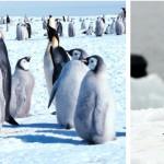 Pinguini, genoma diverso rivela l'adattamento al clima antartico