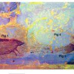 La pittura rupestre nacque in Indonesia oltre 45000 anni fa