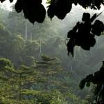 Riforestazione e foreste pluviali, gli scienziati iniziano a capire come fare