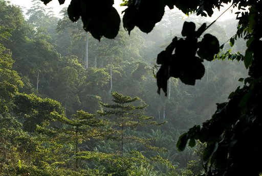 Una foresta pluviale
