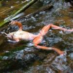 Estinzione degli anfibi, come affrontare le sfide? Intervista a Jaime Garcia Moreno