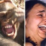 Gli scimpanzé sorridono come gli esseri umani