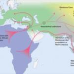 Perché Homo sapiens è sopravvissuto agli altri ominidi