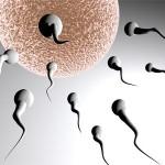 Lo stress diminuisce la qualità dello sperma e riduce la fertilità