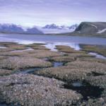 Lo scongelamento del permafrost causa l'imbrunimento dei laghi nel Nord