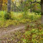 Terreni forestali adatti per assorbire il carbonio dall'aria