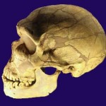 Scoperto primo ibrido tra Neanderthal e Homo Sapiens
