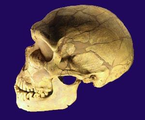 Teschio di Neanderthal
