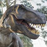 Evoluzione a velocità diverse per i primi mammiferi