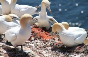 Perfino l'Artico contaminato da rifiuti plastici marini