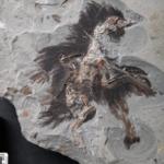 Cheratina e melanosomi conservati in un uccello fossile di 130 milioni di anni