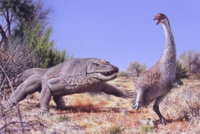 uccello-gigante-australia