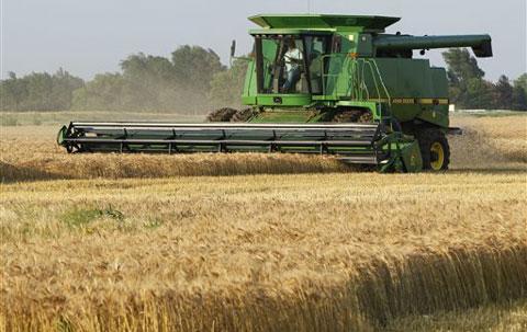 Mietitura del grano in Uzbekistan - fonte VOA