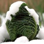 Coldiretti: ecco la dieta antigelo per i freddi giorni invernali