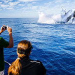 Maui: più di 1000 le megattere avvistate dai volontari