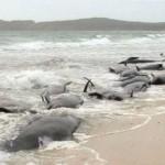 Fukushima: non ci sono balene morte a causa della radioattività
