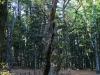castagno_miraglia_parco_nazionale_delle_foreste_casentinesi