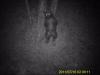 Monitoraggio genetico orso marsicano