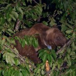 E' viva l'orsa Gemma, a rivelarlo il test del DNA