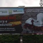 Manifesto shock degli allevatori a Grosseto<br> Agnello sgozzato per la lotta contro i predatori