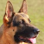 Dopo la tragedia di Siena esperto ammonisce: mai i cani soli con i bambini