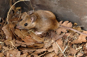 Quali foreste per i piccoli mammiferi?