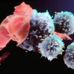 Nuova arma contro il cancro: linfociti T creati da cellule staminali