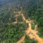 Deforestazione in Borneo interessa l'80% del territorio: gli scienziati lanciano l'allarme