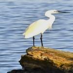 Un San Valentino di birdwatching in Sardegna