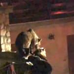 L'orsa Gemma finirà in gabbia?