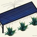 Coltivazioni agricole e parchi fotovoltaici: un connubio vincente